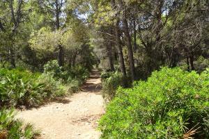 Wanderung L'olla Wald